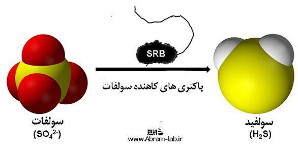 تست میکروبی SRB